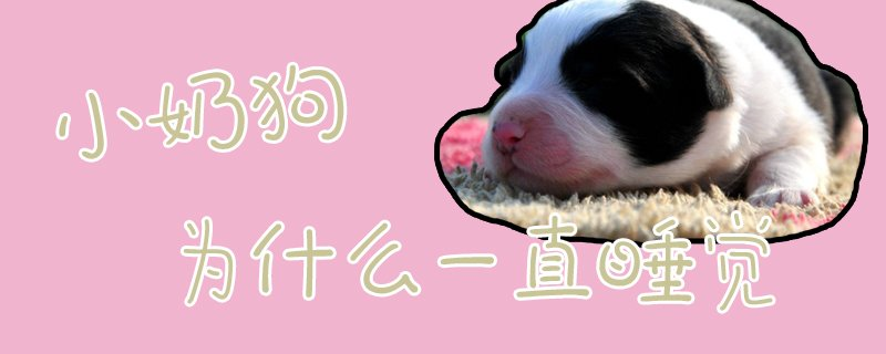 小奶狗为什么一直睡觉